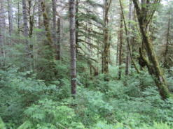 The Clatsop State Forest in Oregon's Coast Range.
