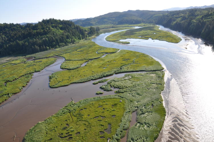 Floodplain of the North Fork Siuslaw River, Oregon.
