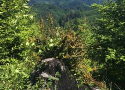 Photo of the Elliot State Forest.