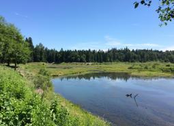 Clackamas River Area