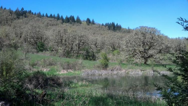 Yamhill and Willamina Oaks North
