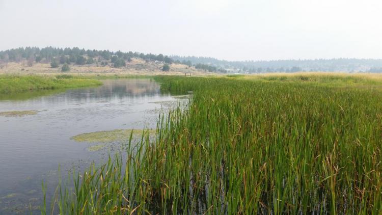Sprague River