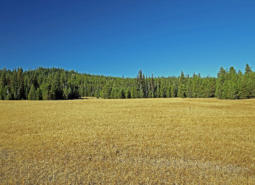 Lodgepole pine and meadow in the North Fork John Day River 1 COA.