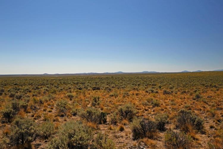 Sagebrush steppe habitat in the Northern Basin and Range ecoregion.