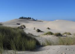 Oregon Coastal Dunes