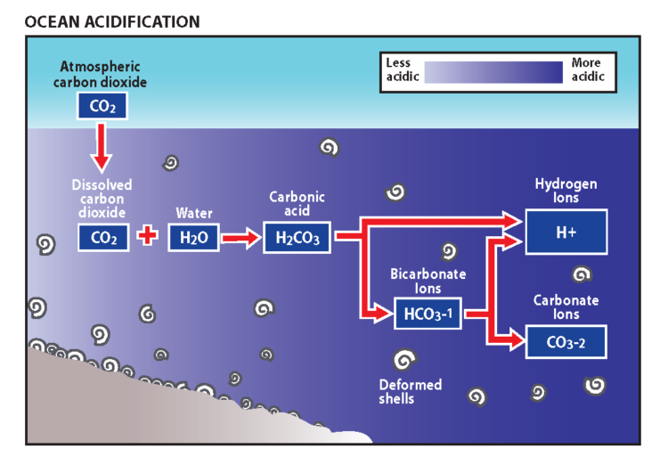 Ocean acidification diagram