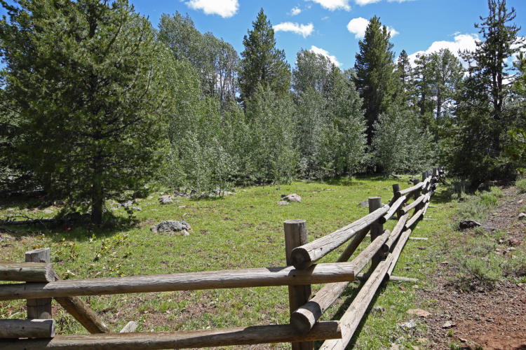 Fencing to reduce grazing in aspen stands.