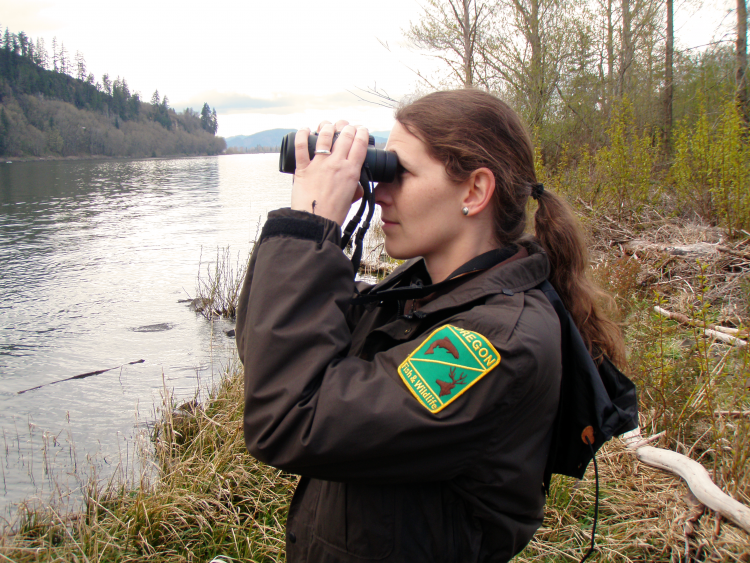 An ODFW biologist conducting a survey on Bald Eagles along the Columbia River.