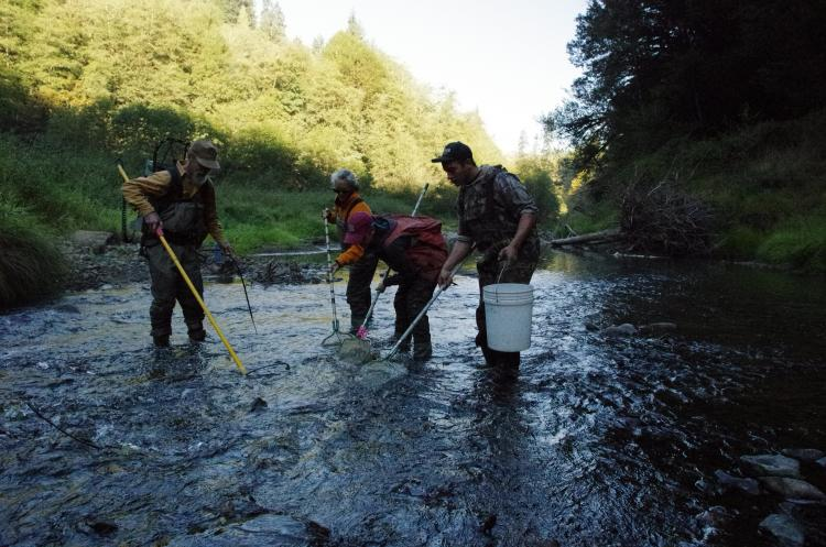Millicoma Dace fish sampling