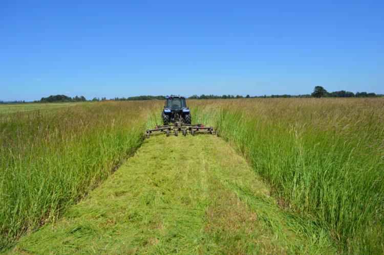 Mowing reed canary grass in a restoration project in the Willamette Valley.