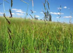 Oregon-semaphore-grass_ODA_460.jpg