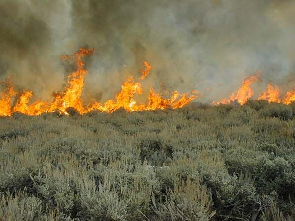 Sagebrush fire in southeastern Oregon.