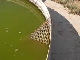 Water tank escape ramps help birds, bats, and other small wildlife to climb out and avoid drowning.